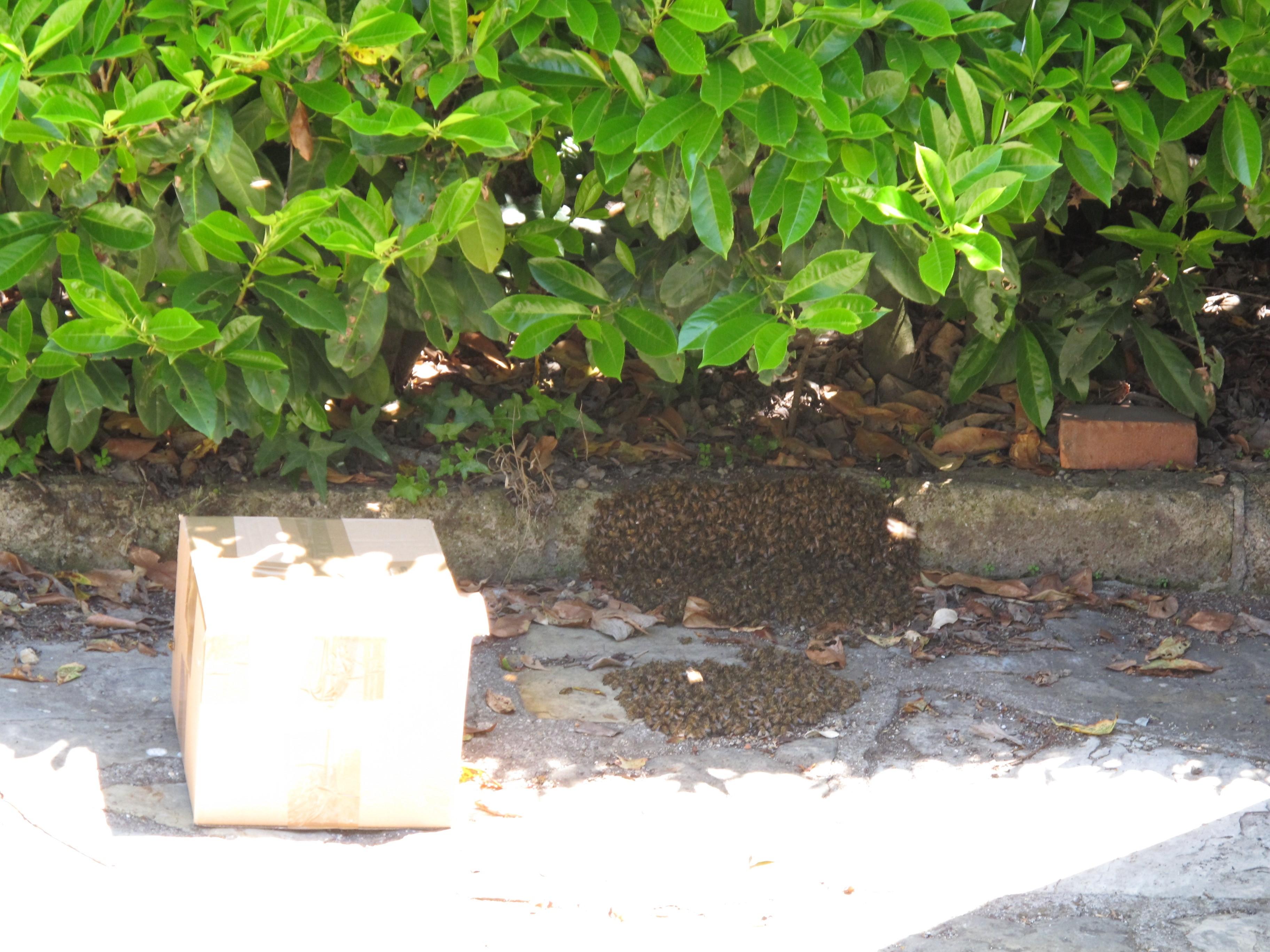 api appena arrivati