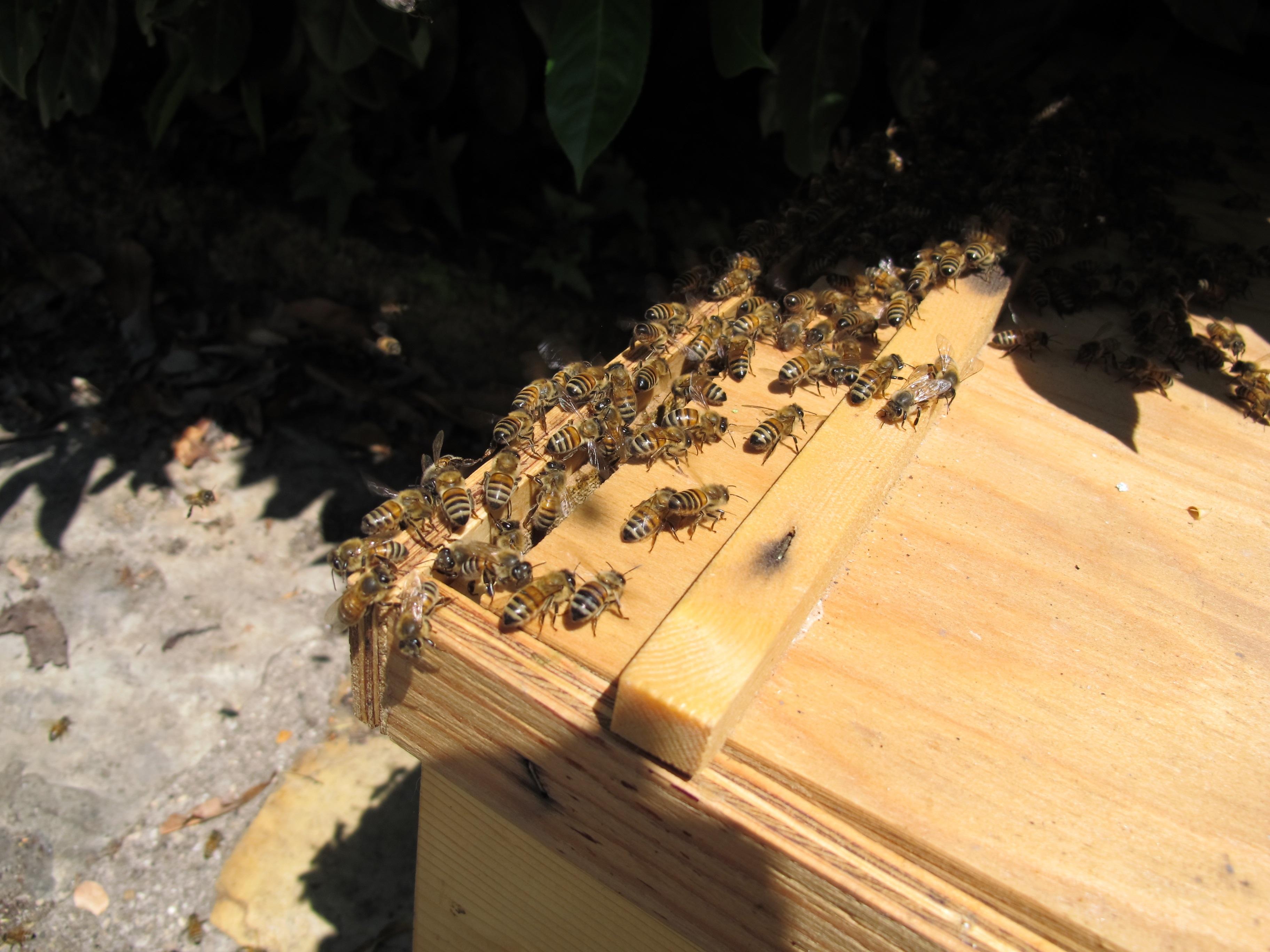 api aull'arnia1